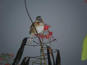 Monteverde Birdie