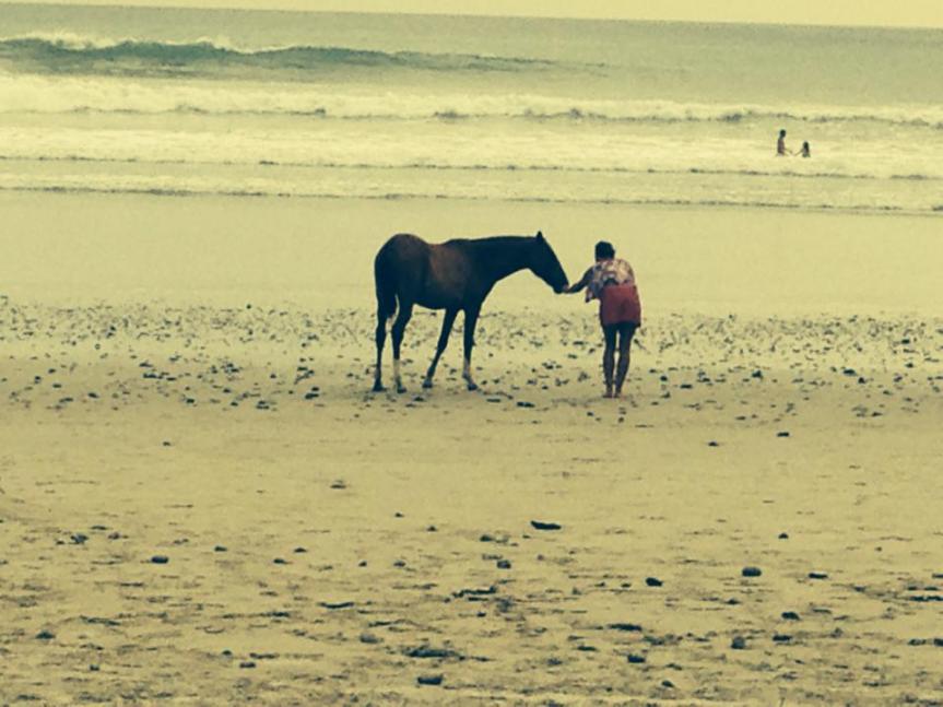 horsey3.jpg