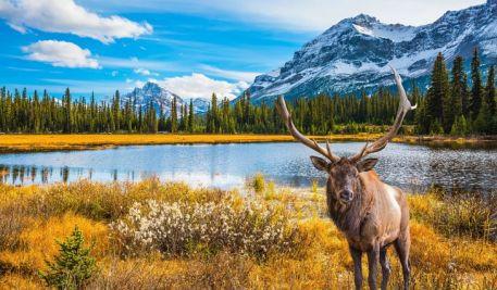 moose canad.jpg